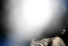 Foto Marco Tigre En La Noche 220x150 - Foto Marco Tigre En La Noche