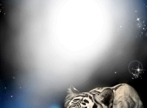 Foto Marco Tigre En La Noche 298x220 - Foto Marco Tigre En La Noche