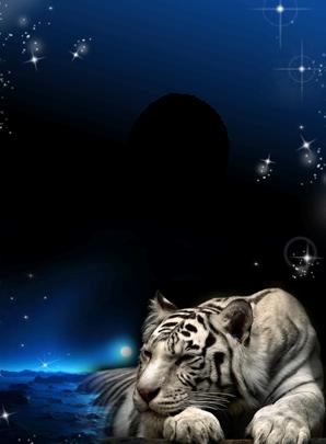 Foto Marco Tigre En La Noche 298x405 - Foto Marco Tigre En La Noche