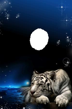 Foto Marco Tigre En La Noche - Foto Marco Tigre En La Noche