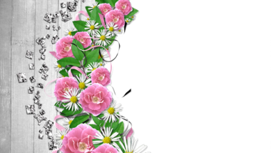 Marcos Para Foto Flores De Mandolina 390x220 - Marcos Para Foto Flores De Mandolina