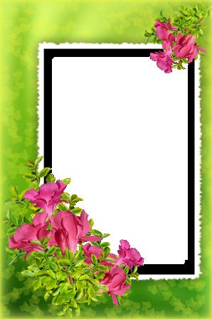 Marcos Para Foto Flores Tiernas - Marcos Para Foto Flores Tiernas