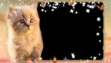 Gato gatito 390x220 - Gato gatito
