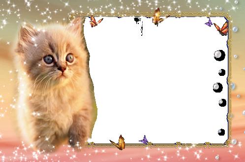 Gato gatito - Gato gatito