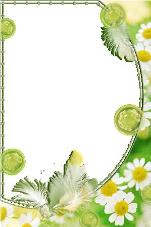 Marco Para Foto Delicadas Flores De Manzanilla - Marco Para Foto Delicadas Flores De Manzanilla