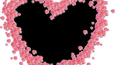 Marco Para Foto Hermosas Flores Rojas En Forma De Corazón 390x220 - Marco Para Foto Hermosas Flores Rojas En Forma De Corazón