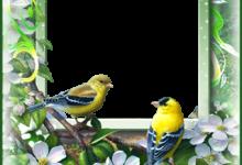 Marco Para Foto Las Aves Más Bellas Del Amor Y La Primavera. 220x150 - Marco Para Foto Las Aves Más Bellas Del Amor Y La Primavera.