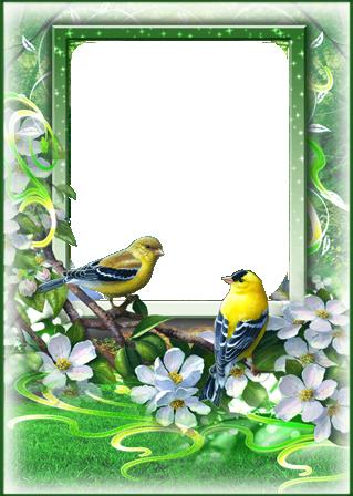 Marco Para Foto Las Aves Más Bellas Del Amor Y La Primavera. - Marco Para Foto Las Aves Más Bellas Del Amor Y La Primavera.