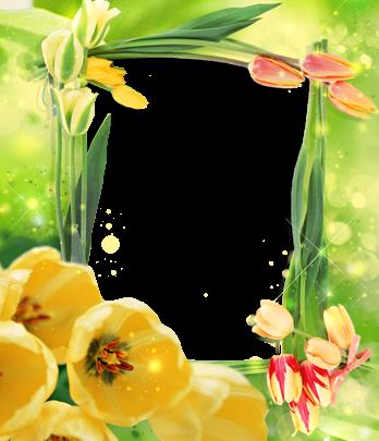 Marco Para Foto Las Flores De Tulipán Más Bellas Para Cada Amante. 348x405 - Marco Para Foto Las Flores De Tulipán Más Bellas Para Cada Amante.