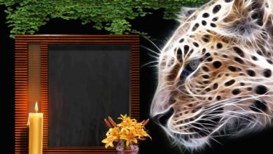 Marco Para Foto Tigre De La Noche 390x220 - Marco Para Foto Tigre De La Noche