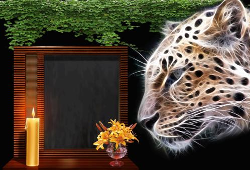 Marco Para Foto Tigre De La Noche - Marco Para Foto Tigre De La Noche