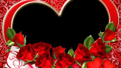 Te amo con todo mi corazon 390x220 - Te amo con todo mi corazon