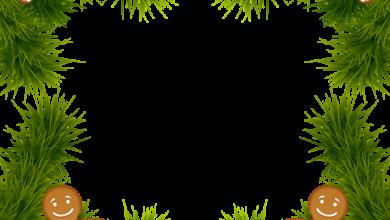 Marco de pino de Navidad con adornos de pan de jengibre Imagen de imágenes prediseñadas 390x220 - Marco de pino de Navidad con adornos de pan de jengibre Imagen de imágenes prediseñadas