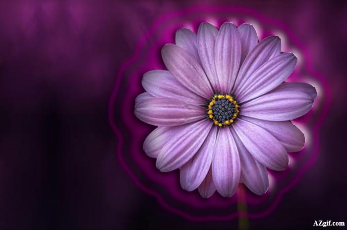 Flor Purpura Marcos de Foto - Flor Purpura Marcos de Foto