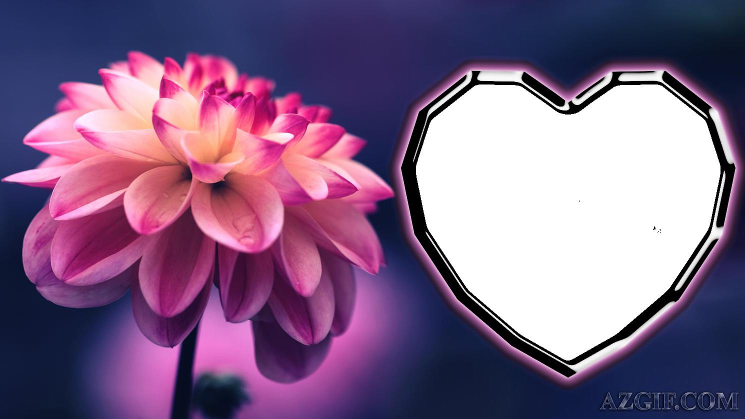 Marcos de Fotos Efecto Flor 1 - Marcos de Fotos Efecto Flor