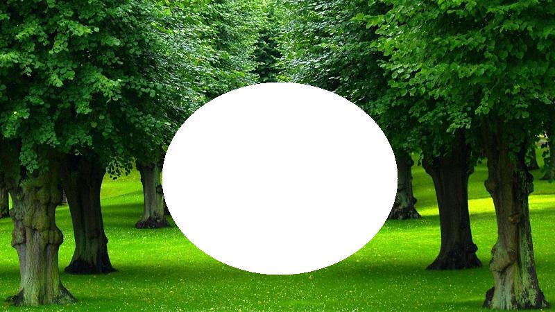 rbol Marco  - árbol Marco