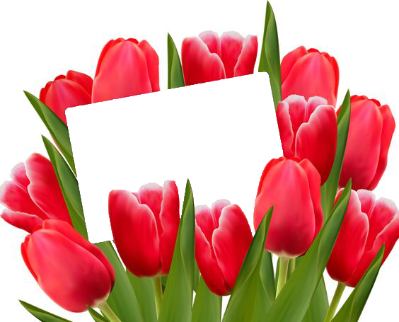 rosas rojas para el d%C3%ADa de san valent%C3%ADn Marcos para fotos - Amo Marcos para foto