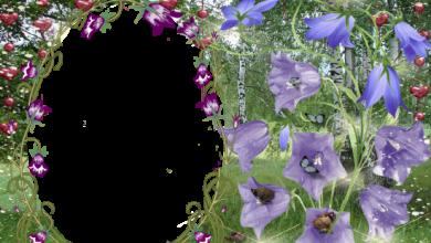Blue roses love photo frame 390x220 - Blue roses love photo frame