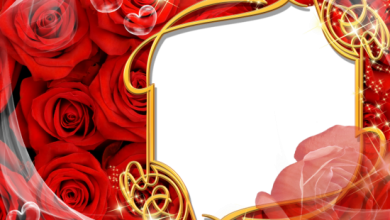 golden and red roses love photo frame 390x220 - golden and red roses love photo frame