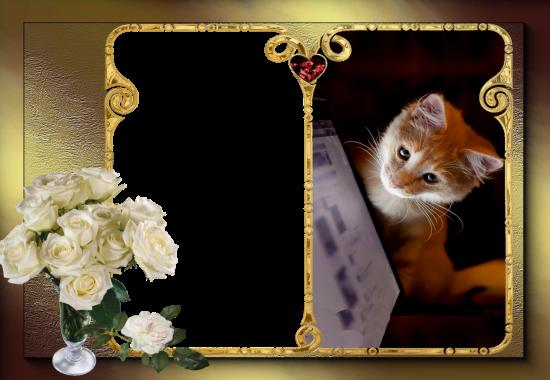 romantic cute cat love photo frame - romantic cute cat love photo frame