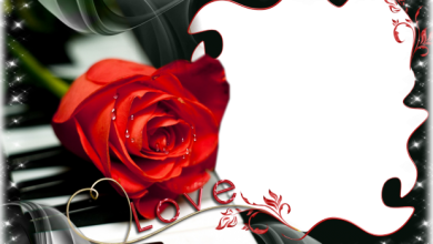 romantic piano with red flower romantic photo frame 390x220 - romantic piano with red flower romantic photo frame