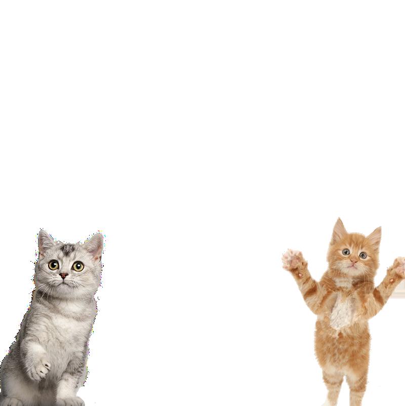 Lindas dos gatos marco de la foto - Lindas dos gatos marco de la foto