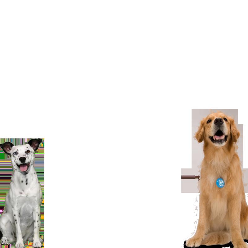 Lindas dos perros marco de la foto - Lindas dos perros marco de la foto