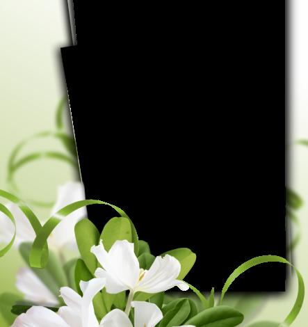 Un marco de flores de jazmín Marcos para Fotos 443x470 - Un marco de flores de jazmín Marcos para Fotos