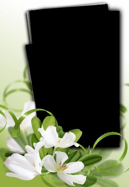 Un marco de flores de jazmín Marcos para Fotos - Un marco de flores de jazmín Marcos para Fotos