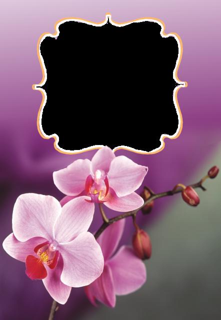 Un marco de rosas rosadas Marcos para Fotos - Un marco de rosas rosadas Marcos para Fotos