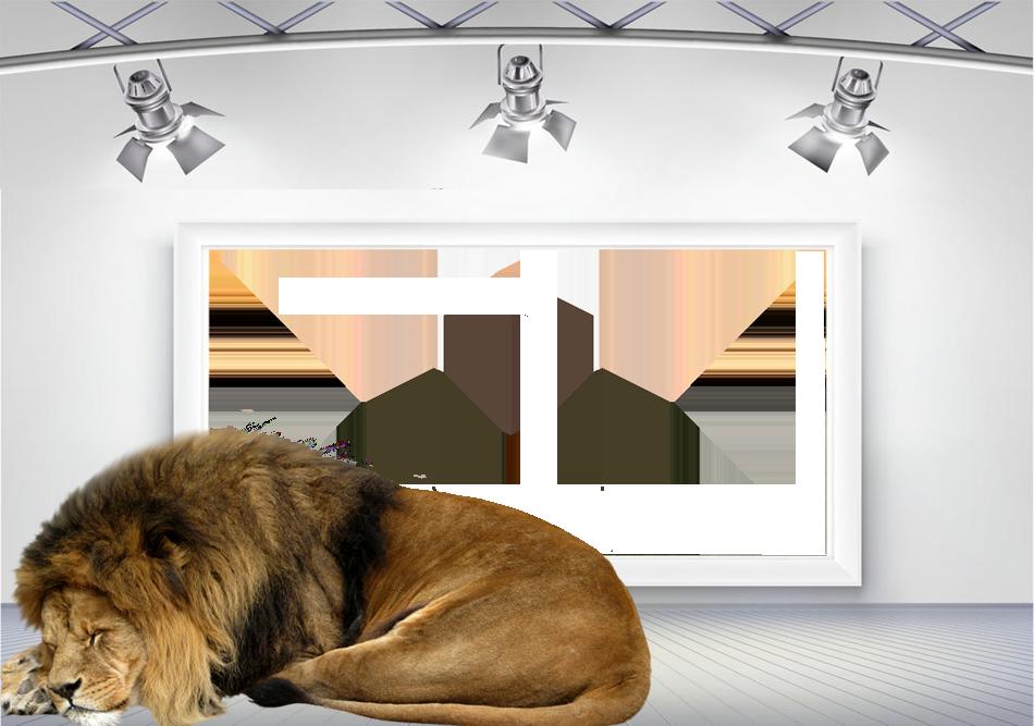 león soñoliento marco de la foto - león soñoliento marco de la foto