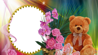 oso de peluche con marco de fotos de flor rosa 390x220 - oso de peluche con marco de fotos de flor rosa