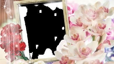 Photo of pequeño marco de fotos de flores abiertas