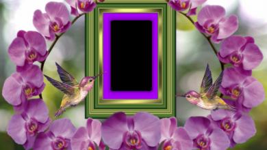 el marco de fotos romantico nido de dos pajaros 390x220 - el marco de fotos romántico nido de dos pájaros