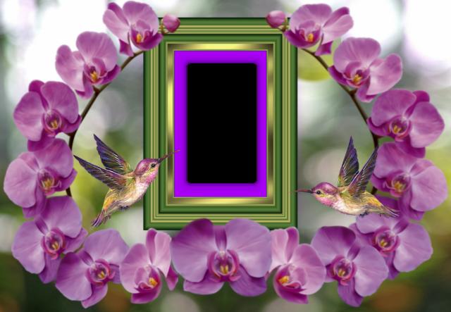 el marco de fotos romantico nido de dos pajaros - el marco de fotos romántico nido de dos pájaros
