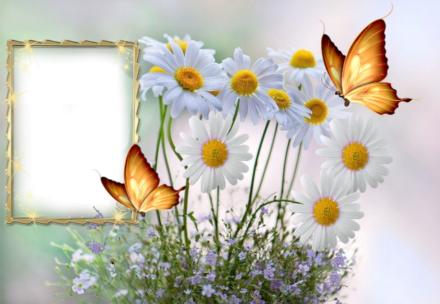 mariposas romanticas luminosas son un marco de fotos muy hermoso - mariposas románticas luminosas son un marco de fotos muy hermoso