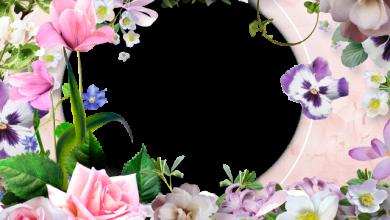 mis romanticas flores dulces con mi marco de fotos 390x220 - mis románticas flores dulces con mi marco de fotos