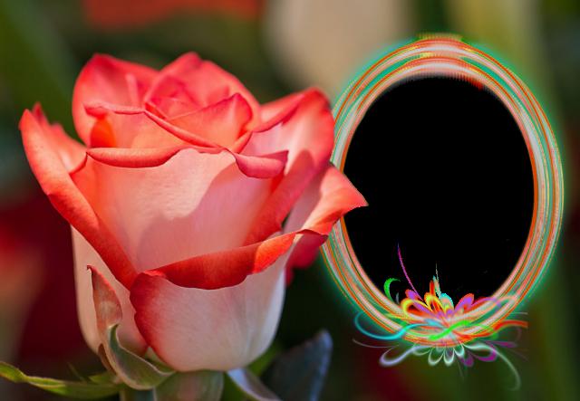 marco de fotos circular con hermoso color y rosa roja - marco de fotos circular con hermoso color y rosa roja