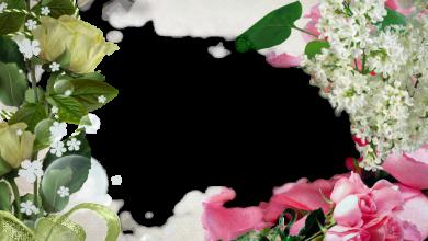 marco de fotos muy hermoso lleno de rosas 390x220 - marco de fotos muy hermoso lleno de rosas