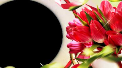 marco de fotos muy hermoso y romantico con flores rojas 390x220 - marco de fotos muy hermoso y romántico con flores rojas